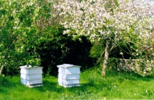 Bee hives at Monks House, East Sussex, Virginia Woolf's home