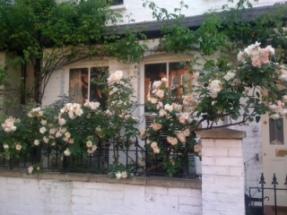 Teresa's Garden 1