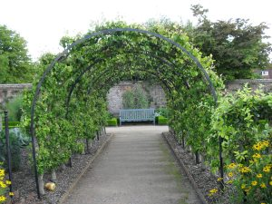 A tunnel of trained fruit